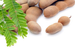 新鲜的罗望子树和叶子 免版税库存照片