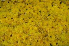 新鲜的美丽的明亮的黄色开花的菊花开花与卖在地方市场上的绿色花粉的背景 免版税库存照片