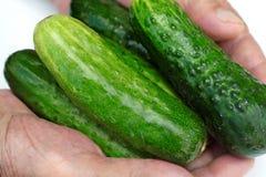 新鲜的自然绿色黄瓜在手中 库存图片