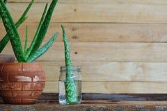 新鲜的芦荟维拉盆栽植物和词根在木桌,皮肤疗法概念上 免版税库存图片