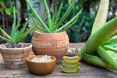 新鲜的芦荟维拉词根切片和胶凝体在木桌,皮肤疗法概念上 库存图片
