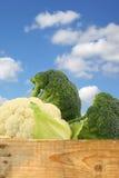 新鲜的花椰菜和硬花甘蓝 免版税库存图片