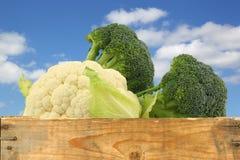 新鲜的花椰菜和硬花甘蓝 库存图片