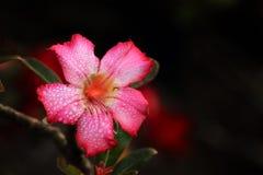 新鲜的花 库存照片