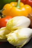 新鲜的苦苣生茯 免版税库存图片