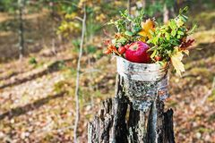 新鲜的苹果和莓果狂放在青苔上升了 免版税库存图片