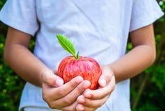 新鲜的苹果果子在手中男孩 自然的爱 免版税库存照片
