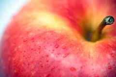 新鲜的苹果 图库摄影