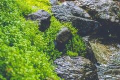 新鲜的草和湿石头 免版税图库摄影