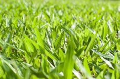 新鲜的草坪早晨 免版税图库摄影