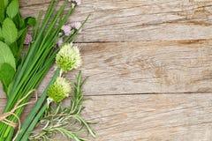 新鲜的草本和香料在庭院桌上 库存图片