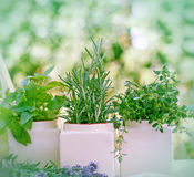 新鲜的草本-香料 库存图片