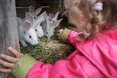 给新鲜的草的白肤金发的小孩女孩农场在动物储藏箱中驯化了白色兔子 免版税库存照片