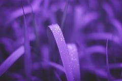 新鲜的草紫外背景  库存图片