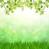 新鲜的草绿色叶子 免版税图库摄影
