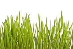 新鲜的草绿色草坪 库存图片