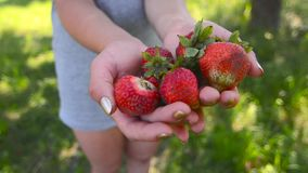 新鲜的草莓在女孩的手上在庭院1里 股票录像