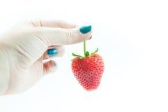 新鲜的草莓在手中,一个开胃草莓在白色的妇女` s戏弄的手上 库存图片