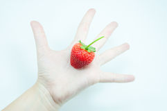 新鲜的草莓在手中,一个开胃草莓在白色的妇女` s戏弄的手上 免版税库存照片