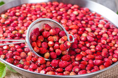 新鲜的草莓在筛子的水中 库存图片