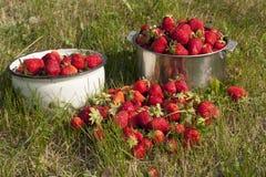 新鲜的草莓照片 免版税库存照片