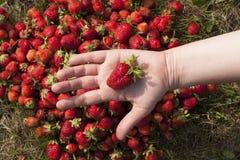 新鲜的草莓照片 免版税库存图片