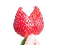 新鲜的草莓特写镜头与叮咬的 免版税图库摄影