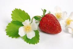 新鲜的草莓甜点 免版税库存图片