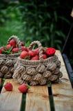 新鲜的草莓篮子在一个绿色庭院和树枝的背景的 库存图片