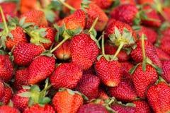 新鲜的草莓选择焦点 免版税库存照片