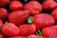 新鲜的草莓 免版税库存照片