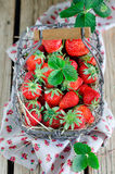新鲜的草莓 库存图片