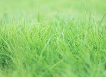 新鲜的草 免版税库存照片