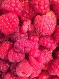 新鲜的莓在Pazardjik食物市场上在保加利亚 库存照片