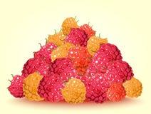 新鲜的莓手图画  库存图片