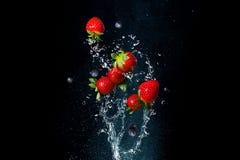 新鲜的莓果飞溅水在黑背景 水多的草莓 免版税图库摄影