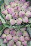 新鲜的莲花芽在花市场上在曼谷泰国 库存图片