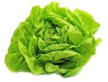 新鲜的莴苣沙拉 免版税库存照片