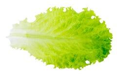 新鲜的莴苣/在白色背景/特写镜头隔绝的一片叶子 免版税库存图片