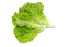 新鲜的莴苣 沙拉叶子 新鲜的绿色莴苣叶子 库存图片