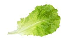 新鲜的莴苣 沙拉叶子 新鲜的绿色莴苣叶子 免版税库存照片