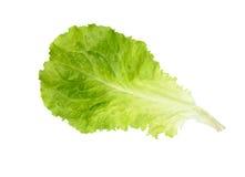 新鲜的莴苣 沙拉叶子 新鲜的绿色莴苣叶子 免版税库存图片