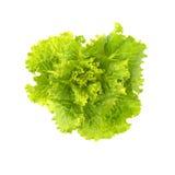 新鲜的莴苣 沙拉叶子 新鲜的绿色莴苣叶子 库存照片