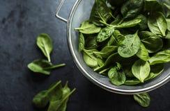 新鲜的菠菜叶子 免版税图库摄影