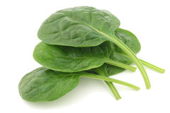 新鲜的菠菜叶子 库存图片