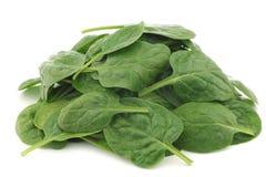 新鲜的菠菜叶子 免版税库存图片