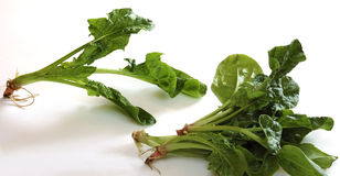 新鲜的菠菜枝杈 免版税库存图片