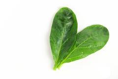 新鲜的菠菜,高蛋白 库存图片
