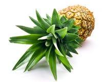 新鲜的菠萝被隔绝在白色背景 库存图片