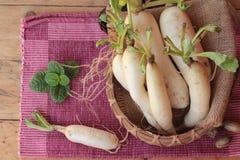 新鲜的萝卜和烂醉如泥的萝卜烹调的 免版税库存图片